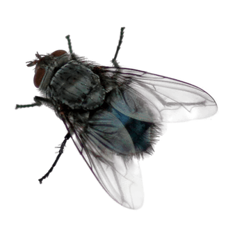 fly transparent-2